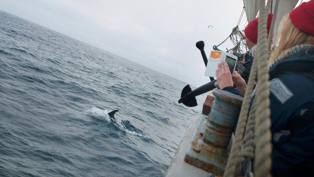 Sailing exchange dolphins - Vega Gambleby - Windseeker